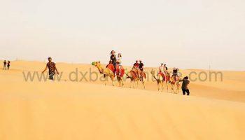camel group 2