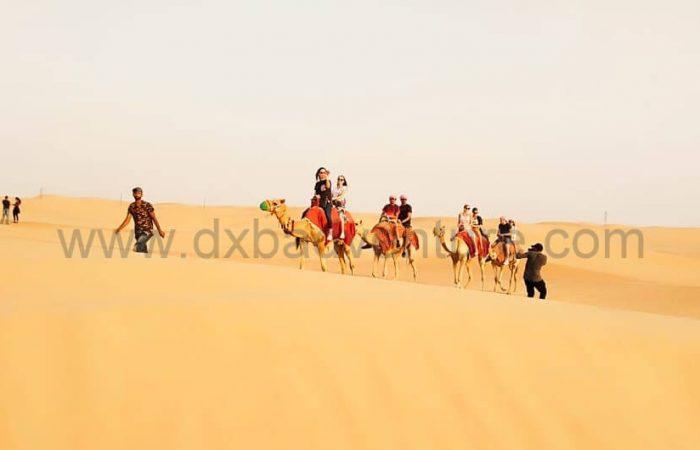 Morning Desert Safari Camel Pics