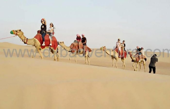 Dubai Desert Safari Camel Group Pics